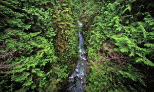 Lynn Canyon Park (Vancouver)