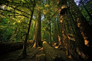 The Red Creek fir surroundings