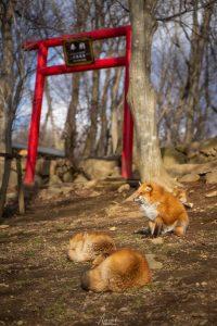 Zaō Fox Village